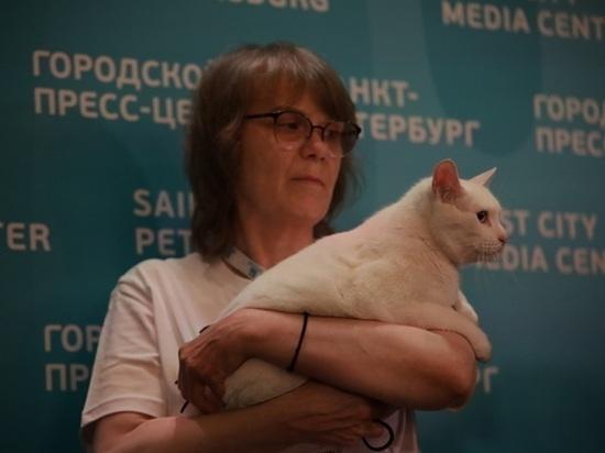 """Эрмитажный кот Ахилл """"предсказал"""" победу России над Финляндией"""