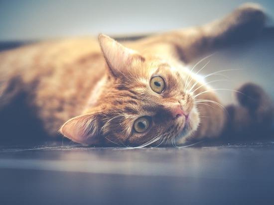 «По трубе потекла моча»: 30 кошек в квартире соседа беспокоят жителей Ноябрьска