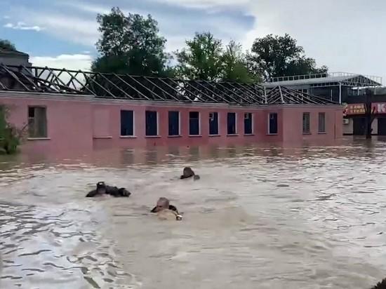 Спасатели вплавь сопроводили лодку с Аксеновым в затопленной Керчи