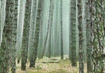В калужских лесах уровень пожарной опасности вырос до третьего