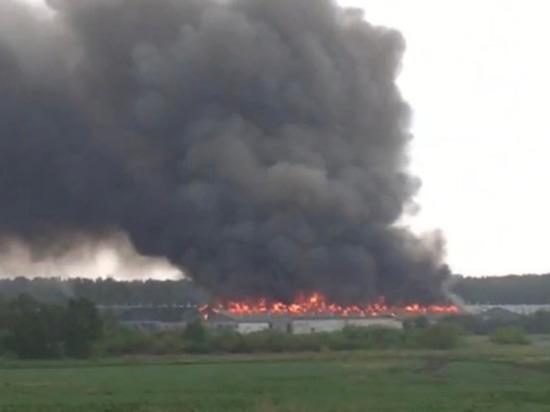 Из-за удара молнии под Челябинском загорелась птицефабрика «Равис»