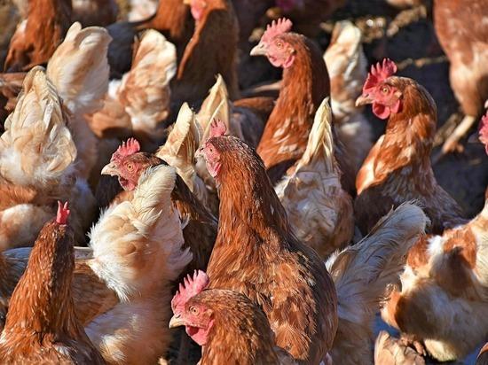 Пожар в корпусе птицефабрики с 250 тыс. птиц локализовали в Челябинской области