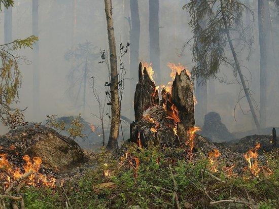 Больше 60 гектаров леса горят в Пуровском районе