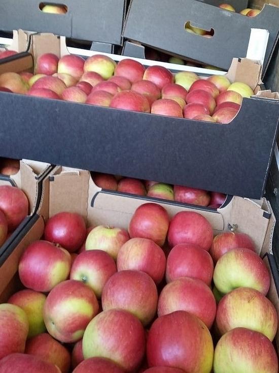 40 тонн «неправильных» томатов и яблок задержали на Смоленской таможне