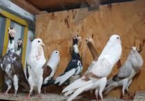 Птицу необычной наружности заприметили на газоне возле детского кафе в Реутове местные жители