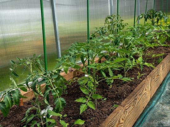 Агрономы рассказали, как спасти урожай в жару