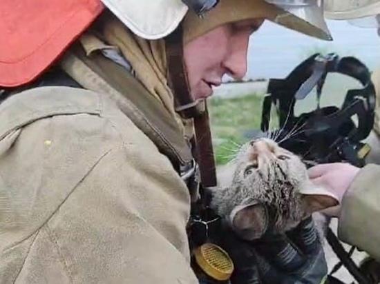 Пожарные вернули к жизни отравившуюся угарным газом кошку в Новом Уренгое