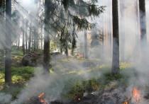 В Кировской области случилось 43 лесных пожара