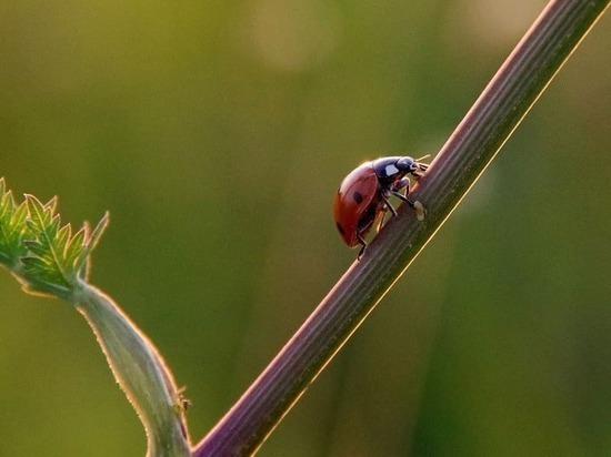 Жителям Серпухова предложили устроить фотоохоту на насекомых