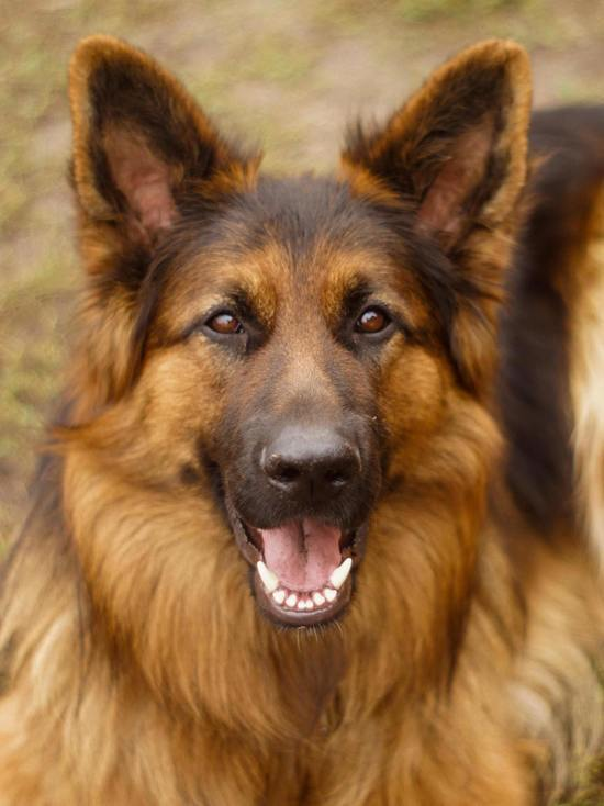 В Оренбурге мужчина выкинул собаку с 9 этажа