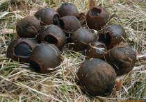 В Бурятии нашли два новых вида съедобных и лечебных грибов