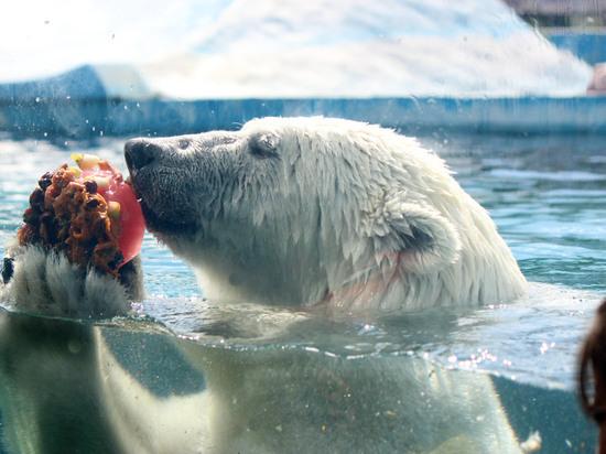 """Из-за жары животным в зоопарке """"Лимпопо"""" начали давать фруктовый лед"""