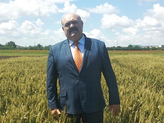 На смену рису и кукурузе пришли новые культуры