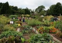 Названо 7 способов сэкономить время и силы в огороде