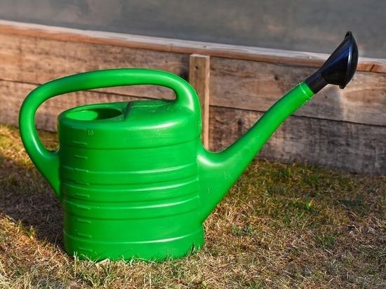 Люди набирают воду в свою тару и несут к гибнущим из-за жары деревьям