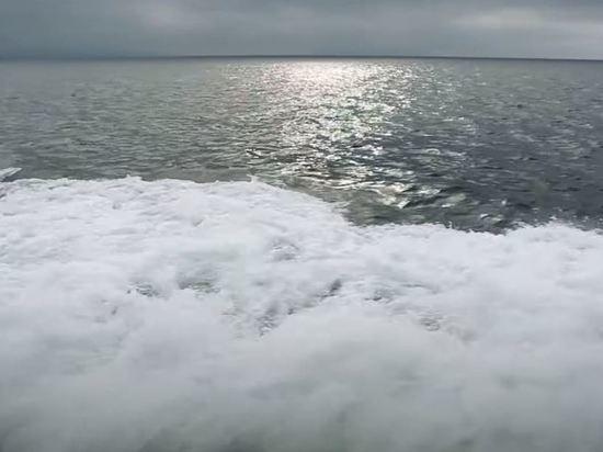 В Беринговом море открыли новый вид рыб
