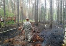 Безответственность ивановцев привела к росту лесных пожаров в три раза