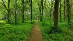 Сохраним зелёные зоны Подмосковья вместе!