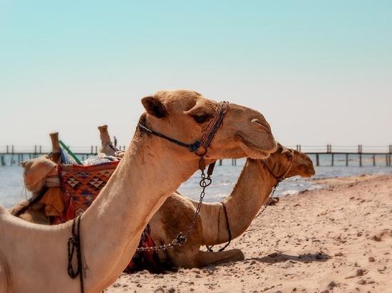 Привитым россиянам разрешили прилетать в Египет без ПЦР-тестов