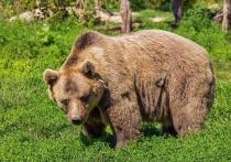 Видео с якобы сбежавшим с территории элитного гольф-клуба медведем, распространенное 23 июня в Сети, оказалось фейком
