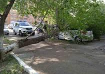 В Чите на улице Матвеева, 35 на автомобиль упало сгнивший тополь