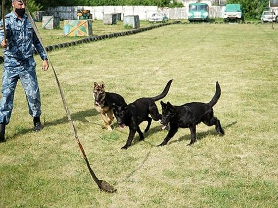 Породистых щенков приняли на службу в алтайское УФСИН