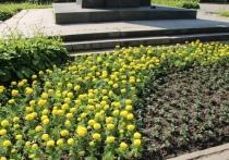 За год в Калуге высадят миллион цветов