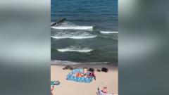 Туристы сняли на видео гуляющую по пляжу Балтики семью кабанов