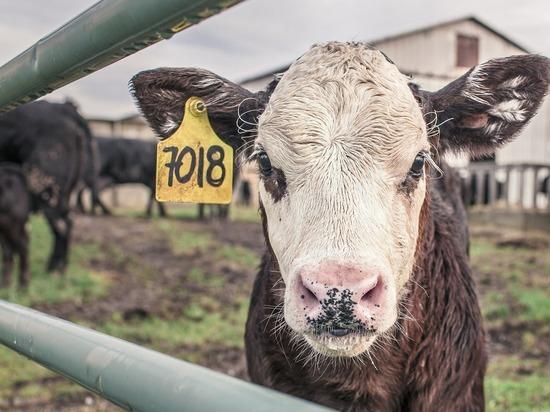 Германия:  Дешевое мясо исчезнет с прилавков Aldi Nord и Aldi Süd