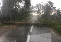 В Калуге ураган вырвал с корнями деревья