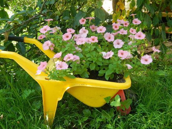 Агроном разъясняет: как, когда и что поливать на огороде
