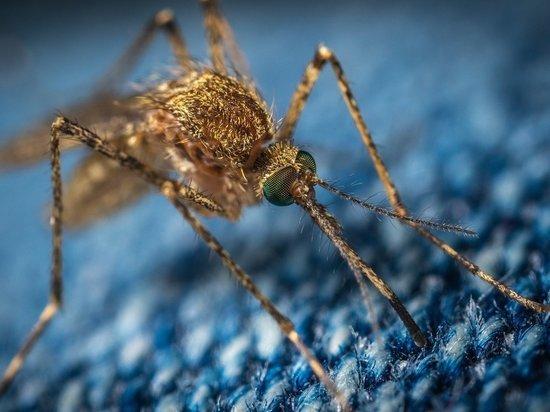 В Алтайском крае продолжают фиксировать высокую численность комаров