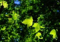 57,5 тысячи деревьев высадили в Псковской области