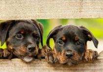 В соцсетях появились доказательства опасной работы с собаками в калужском приюте