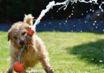Кинологи назвали ТОП-5 вещей, которые нельзя делать в жару с собакой