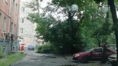 Дерево надломилось во дворе дома в Петрозаводске