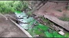 Река позеленела: в микрорайоне Лукьяново в Вологде жители обратили внимание на необычный цвет воды