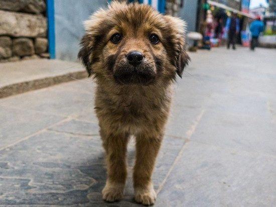 В алтайских селах могут появиться приюты для бездомных животных