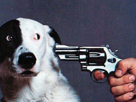 Камчатский полицейский вынужденно застрелили собаку