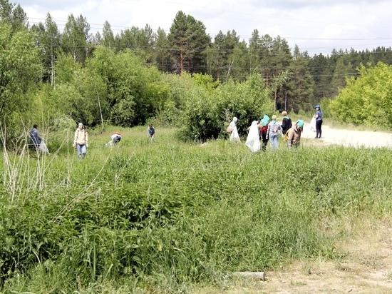 3 июля в Йошкар-Оле пройдет пятый эко-квест «Чистый лес»