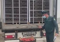 Смоленская таможня остановила фуру, которая по документам везла из Норвегии поливинилхлорид, а на самом деле – яблоки