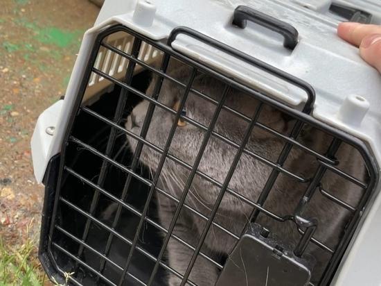 Кота выбросили на помойку в закрытой переноске в Новом Уренгое