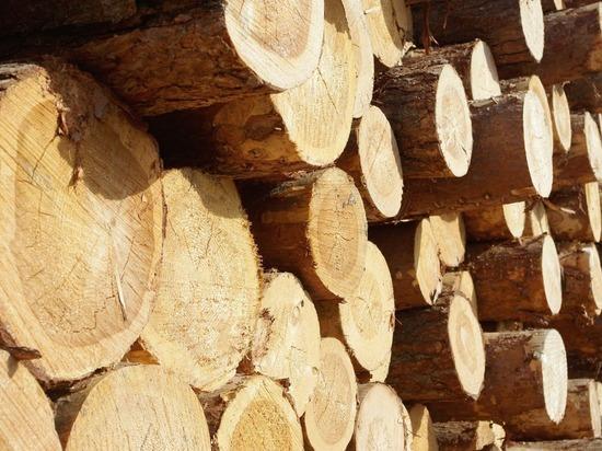 Читинская таможня возбудила 20 уголовных дел на лесную ОПГ