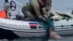 На Сахалине сивуча спасли из сетей на глазах у туристов