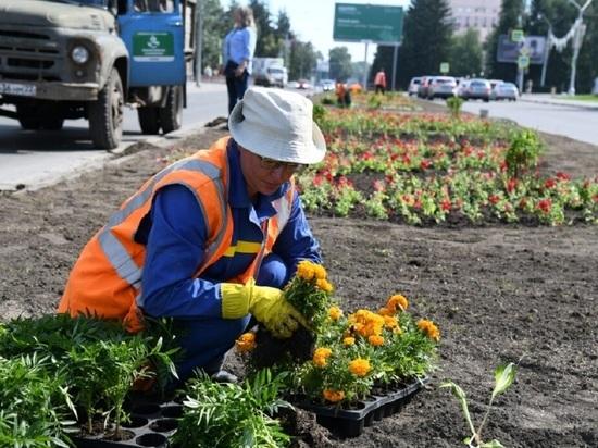 В Барнауле на улице Молодежной высадили 11 тысяч цветов