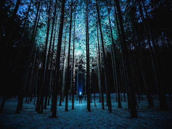 В Марий Эл зафиксировано 25 фактов незаконной рубки леса