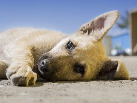 В районах Пензенской области участились нападения бродячих собак