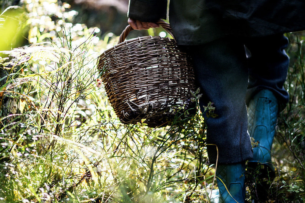 Советы грибникам: если вы потерялись в костромском лесу…