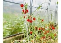Поскольку теплица является универсальной конструкцией для выращивания различных культур, ее конфигурация может отличаться в зависимости от того, какие именно овощи или фрукты в ней растут