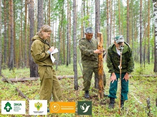 Жители Марий Эл могут записаться в Школу лесных волонтеров